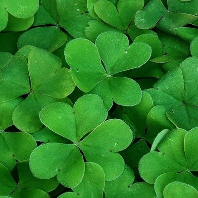 Try Our St Patrick's Day Menu Specials